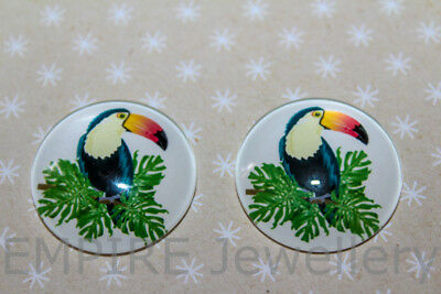 1 x Toucan Tropical Bird 25x25mm Glass Dome Cabochon Cameo Rainforest Kitsch