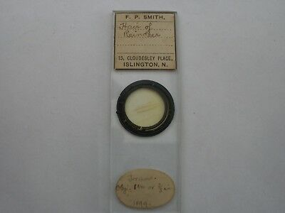 Antique Microscope Slide. Hair of Reindeer. By F.P.Smith