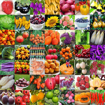 Vegetables and Fruit Seeds Pitaya Pepper Purple Tomato Cucumber Bonsai Plant Lot