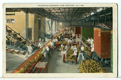 Unloading Bananas From Ship to Rail, 1915 - 1930 New Orleans LA Postcard