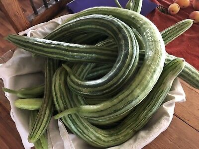 CUCUMBER, PAINTED SERPENT, Organically Grown Seeds Heirloom, Burpless 20+ Seeds