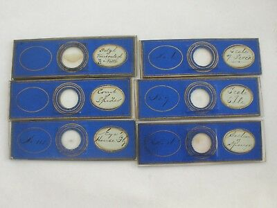 Set of Six Antique Paper Covered Microscope Slides