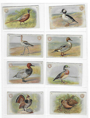 6 Different Church & Dwight Soda-Box Game Bird Cards (Arm & Hammer)