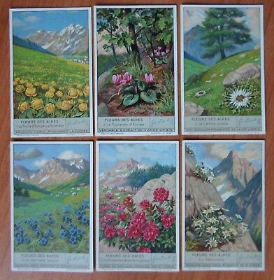 1936 complete set of 6 liebig trade cards S 1335 ALP MOUNTAIN FLOWERS