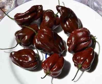 Habanero Chocolate - Hot Chilli Pepper (10 Seeds)