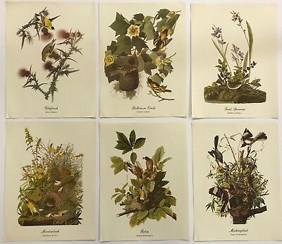 SIX BIRD PRINTS #2, Goldfinch, Oriole ,Sparrow, Meadowlark, Robin ,Mockingbird