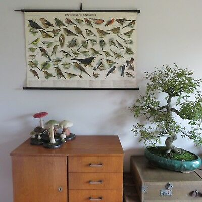 Vintage school chart of SONG BIRDS linen backed educational poster ORNITHOLOGY