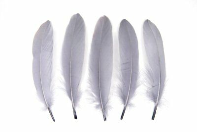 Large Grey Goose Quill Feathers