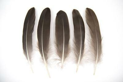 """Large Natural Brown/ Grey Goose Wing Quill Feathers 6-8"""" weddings, crafts UK"""