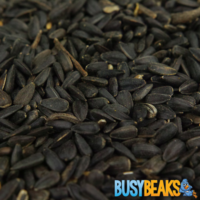BusyBeaks Black Oil Sunflower Seeds - Oil Rich Feed Wild Garden Bird Food