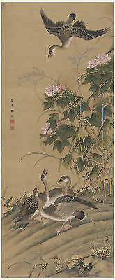 Chinese antique scroll painting Wild geese flocking at a cotton rose embarkment