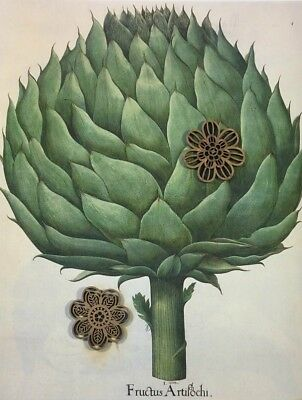 Botanic Art Print Edible Plant Repro Poster from Hortus Eystettensis SEE VARIETY