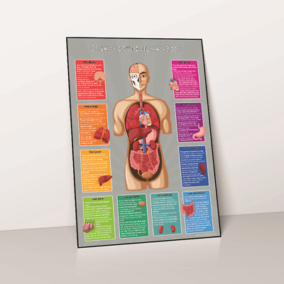 Kids Learn Organs Of The Human Body Parts Educational Childs Wallchart Chart