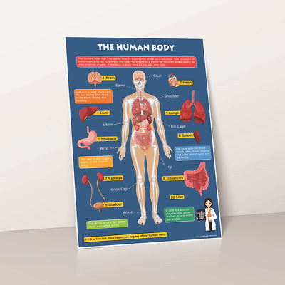 The Human Body Skeleton & Organs Educational Toddlers Childs Wall Chart Poster