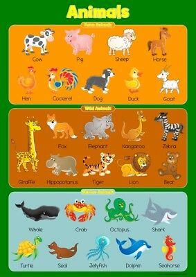 Learn Farm, Wild & Marine Animals Wall Chart Educational Toddlers Kids Poster