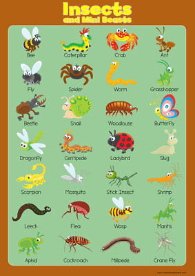 Learn Insects Wall Chart Educational Toddlers Kids Childs Poster Art Print