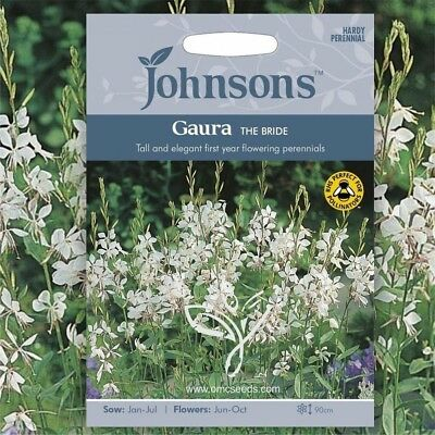 GAURA LINDHEIMERI /'THE BRIDE/' HARDY PERENNIAL 30 Quality  Seeds