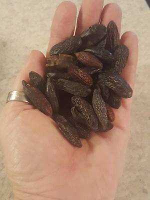 Tonka Beans 7 whole Wiccan Pagan Witch Magic Ritual Love Money with mojo bag
