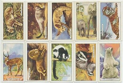 GALLAHER - 1937 : Wild Animals Complete Set (48) Cigarette Cards