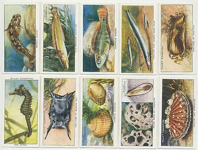 WILLS UK - 1938 : The Sea-Shore Complete Set (50) Cigarette Cards