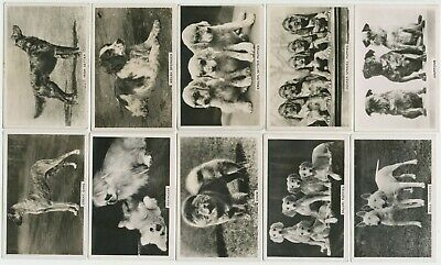 PATTREIOUEX - 1939 : Dogs [Photos] Part Set (35/48) Large Cig. Cards