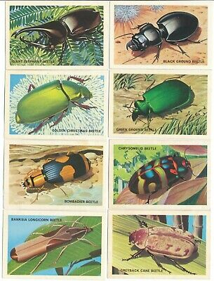 SHELL (Aust.) 1964 : AUSTRALIAN BEETLE SERIES Complete Set (60) Trade Cards