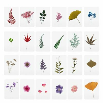 Mix Pressed Flower Leaves Plant Specimen Fillers for Epoxy Resin Making Jewelry