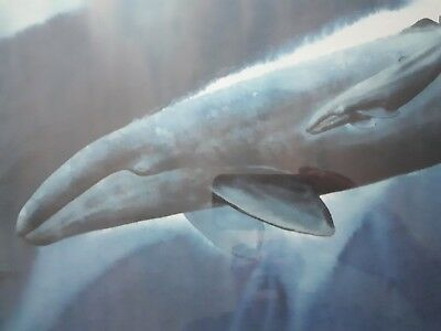 """Robert Wyland Lithograph, """" Gray Whale Waters"""", Hand Signed, Numbered, COA"""