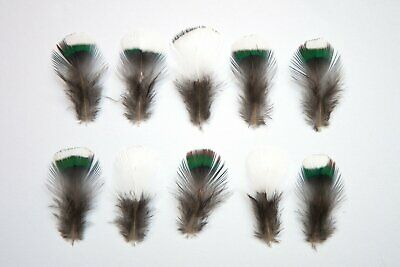 Natural Pheasant Neck Feathers 1-3cm White, Green, Blue - Ethically Sourced