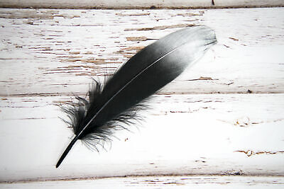 "Large Silver Dipped Black Feathers 6-8"" Great for weddings, crafts dreamcatchers"
