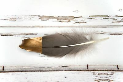 """Large Gold Tipped Natural Grey + Brown Goose Wing Feathers 6-8"""" weddings, crafts"""