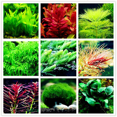 100x Aquarium Plant Mix Seeds Water Grasses Aquatic Plant Grass fish NEW TYPE