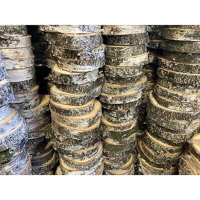 Silver Birch Wood Slices