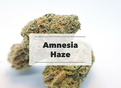 Terpene Amnesia Haze | 2ml Cannabis Terpene | Pharmaqualität