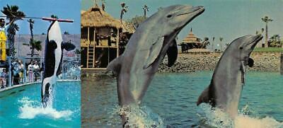 SAN DIEGO, CA California SEAWORLD  Shamu~Snorter~Aphrodite~Jumping TWO Postcards