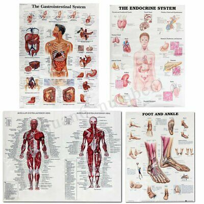 Muscle System Posters Silk Cloth Anatomy Chart Human Body Educational Home
