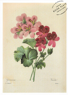 """P.J. Redoute Vintage Flower Book Plate Page French Country Decor 8x11"""""""