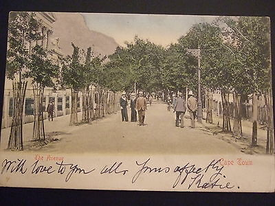 Cape Town ,South Africa, Cape of Good Hope The Avenue, Postcard,  stamp removed
