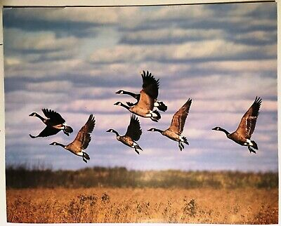 1987 Flying Geese Wildlife Lithograph Poster Print Vintage Wall Art Goose New