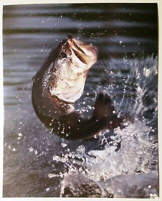 1986 Fish Jumping Wildlife Lithograph Poster Print Vintage Water Wall Art New