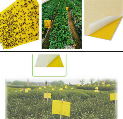 10PCS Large Yellow Greenhouse Sticky Traps -Catch Multiple Flying Insect Pests