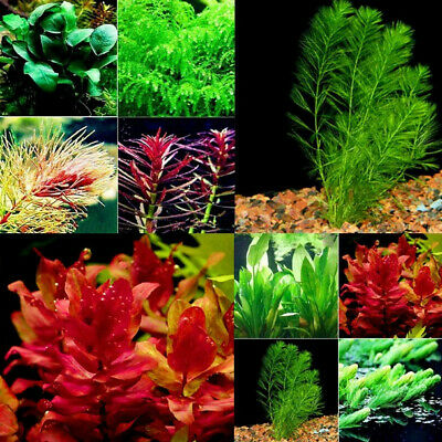 100pcs/bag Randomly Aquarium Plants Seeds Grass Water Aquatic Plant Seeds Indoor