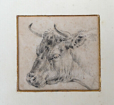 Paulus Potter Attributed Dutch Painter Cow Bull Head  Drawing Fine Quality