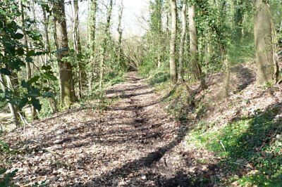 Herefordshire - One and a Third Acres of Deciduous Woodland for Sale.