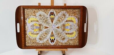 Stunning Vintage Brazilian Butterfly Wing Tray / Wall Hanging