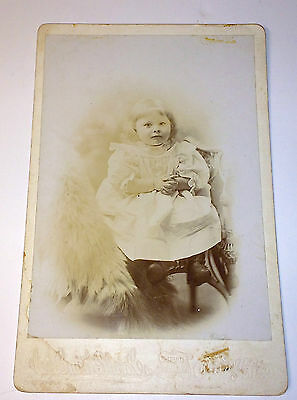 Old Antique Cabinet Photo of Adorable Child Seated W/ Large Fur on Chair! Maine!