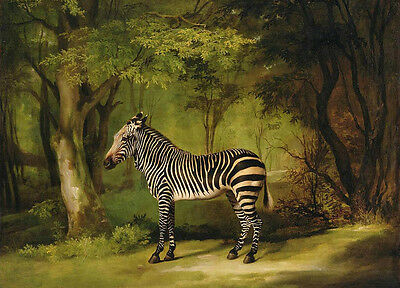 Art oil painting nice wild animal little Zebra Or quagga in forest Hand painted