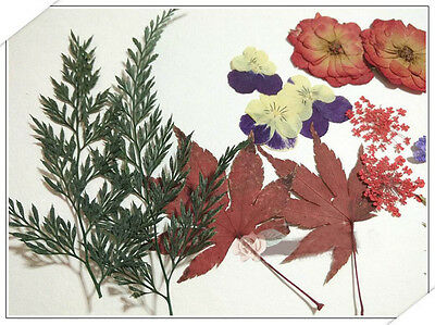 100pcs Mixed Dried Pressed Flowers+Leaf Plant Herbarium Jewelry Craft DIY 003