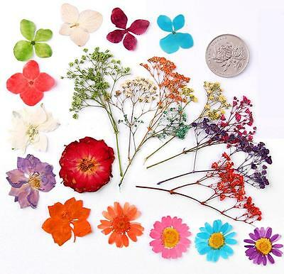 100pcs Mixed Dried Pressed Flowers Plant Herbarium For Jewelry Craft DIY 004