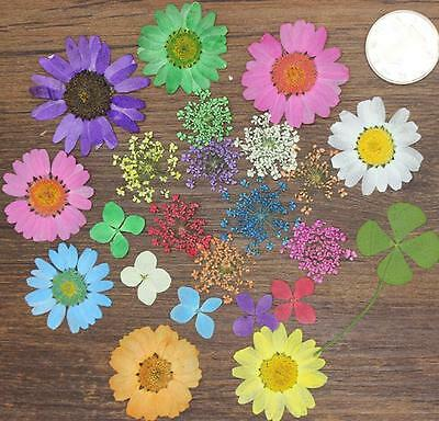 100pcs Mixed Dried Pressed Flowers+Leaf Plant Herbarium Jewelry Craft DIY 002